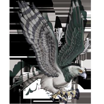 Harpy Roc