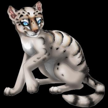 Sugar Puma