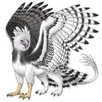 Harpy Eagle gryph