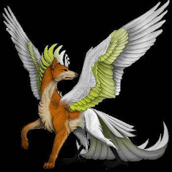 dingo cockatoo